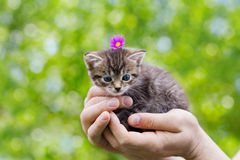 Cute little kitten sitting in male hands against beautiful bokeh background Royalty Free Stock Photo