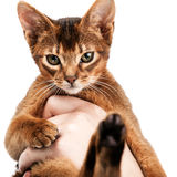 Cute little kitten sitting in the palm of a man Royalty Free Stock Image