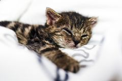 A cute little kitten sleeping in a blanket at home. Stock Photography