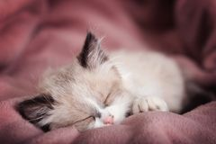 Cute little kitten sleeping on color plaid at home. Closeup stock photos