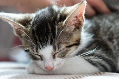 A cute little kitten sleeping royalty free stock photography