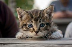 Cute little kitten sleeps on wooden table Royalty Free Stock Photography