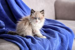 Cute little kitten on sofa covered. With plaid royalty free stock photography