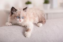 Cute little kitten on sofa at home. Closeup royalty free stock photo