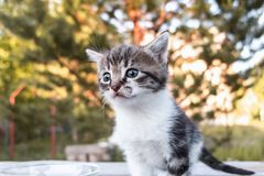 A cute little kitten is standing on a wooden table, outdoors royalty free stock photos