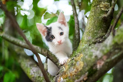 Cute little kitten on the tree in garden Royalty Free Stock Photography