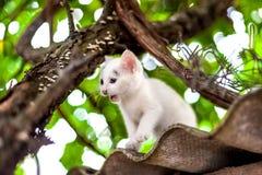 Cute little kitten on the tree in garden Royalty Free Stock Image