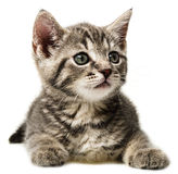 A cute little kitten on a white background Stock Photo