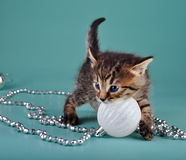 Cute little kitten with white Christmas ball Royalty Free Stock Photo