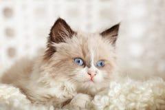 Cute little kitten on white plaid at home. Closeup stock photos