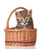 Cute little kitten Royalty Free Stock Photo