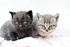 Cute little kittens Royalty Free Stock Photo