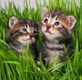 Cute little kittens Stock Image