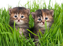 Cute little kittens Stock Image
