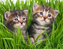 Cute little kittens Stock Photography