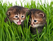 Cute little kittens Stock Photos