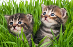 Cute little kittens Royalty Free Stock Photography