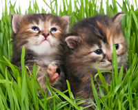 Cute little kittens Stock Images
