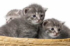 Cute little kittens Stock Photo