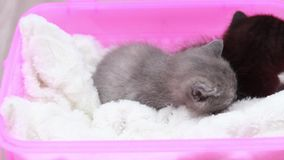 Cute little kittens. Two small kitten on a soft white carpet stock video footage