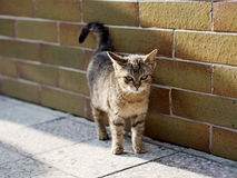 Cute little kitty. Cute lovely young cat waiting at a wall, looking into the camera stock images