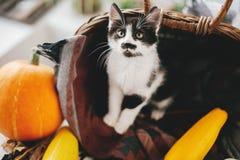 Free Cute Little Kitty Sitting In Wicker Basket With Pumpkin, Zucchin Royalty Free Stock Photos - 123374388