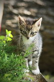 Cute little kitty. On the stone Royalty Free Stock Photos