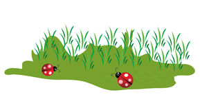 Cute little lady bugs on green grass Stock Photography