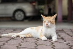 A cute little male cat waiting and sitting in front of the door. A cute little male cat waiting and sitting in front of the door with grumpy face. Selective Stock Images