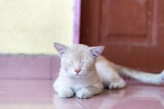 A cute little male cat waiting and sitting in front of the door. A cute little male cat waiting and sitting in front of the door with grumpy face. Selective Stock Photography