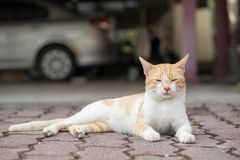 A cute little male cat waiting and sitting in front of the door. A cute little male cat waiting and sitting in front of the door with grumpy face. Selective Stock Photo