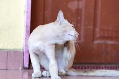 A cute little male cat waiting and sitting in front of the door. A cute little male cat waiting and sitting in front of the door with grumpy face. Selective Stock Image