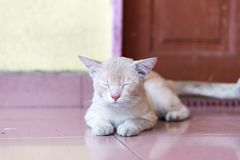 A cute little male cat waiting and sitting in front of the door. A cute little male cat waiting and sitting in front of the door with grumpy face. Selective Royalty Free Stock Image