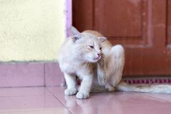 A cute little male cat waiting and sitting in front of the door. A cute little male cat waiting and sitting in front of the door with grumpy face. Selective Stock Photos