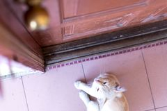 A cute little male cat waiting and sitting in front of the door with grumpy face. Top view. Selective focus Stock Images