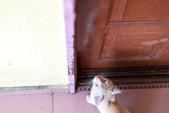A cute little male cat waiting and sitting in front of the door with grumpy face. Top view. Selective focus Stock Image