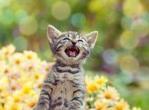 Cute little meowing kitten. In the garden Stock Photo