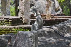 Little monkey  alone Royalty Free Stock Images