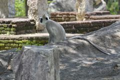 Little monkey  alone Royalty Free Stock Photo