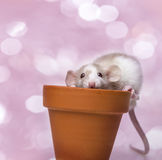 Cute little mouse. Pink background stock photography