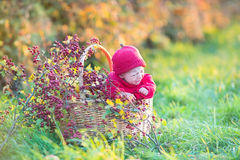 Cute little newborn baby in basket with red berries Stock Photography