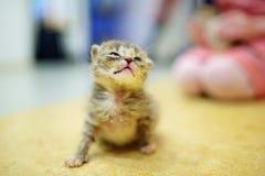 Cute little orphan kitten Stock Photos