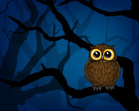 Cute little owl Stock Photos