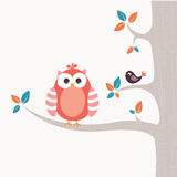 Cute little owl Stock Images