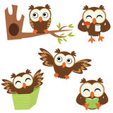Cute little owls. A cute collection of funny little owls Stock Photography