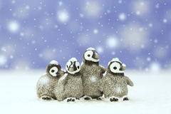 Cute little penguins stock photo