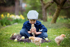 Cute little preschool child, boy, playing with easter eggs and c. Hicks in spring blooming garden, sitting in handmade nest, easter happiness childhood concept Stock Photo
