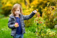 Cute little preschooler girl picking raspberries Royalty Free Stock Photo