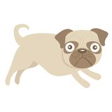 Cute little pug dog Royalty Free Stock Photography