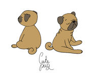 Cute little pug dog. Stock Photos